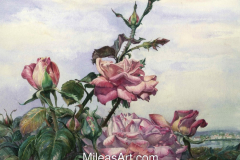Roses from the Hill