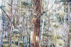 Gum Trees Pemberton